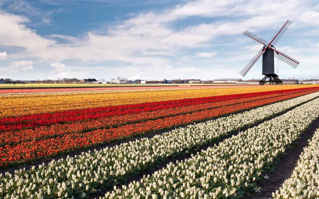 Netherlands [1025]